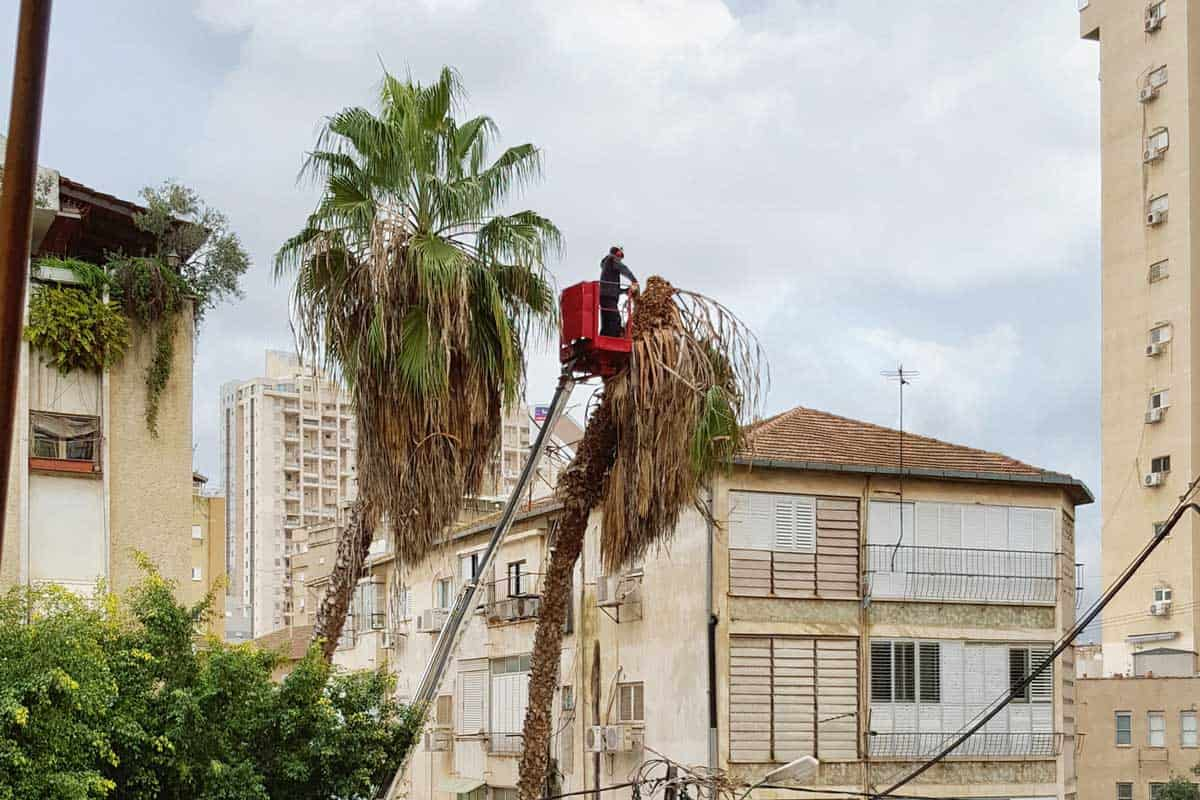 How Much Does it Cost to Remove a Palm Tree? - Garden Tabs