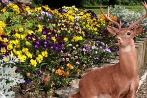 Do Deer Eat Pansies? [And How to Prevent That]