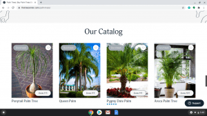 The Tree Center page showing palm trees for sale