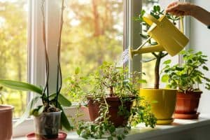 How to Make Houseplants Grow Faster?
