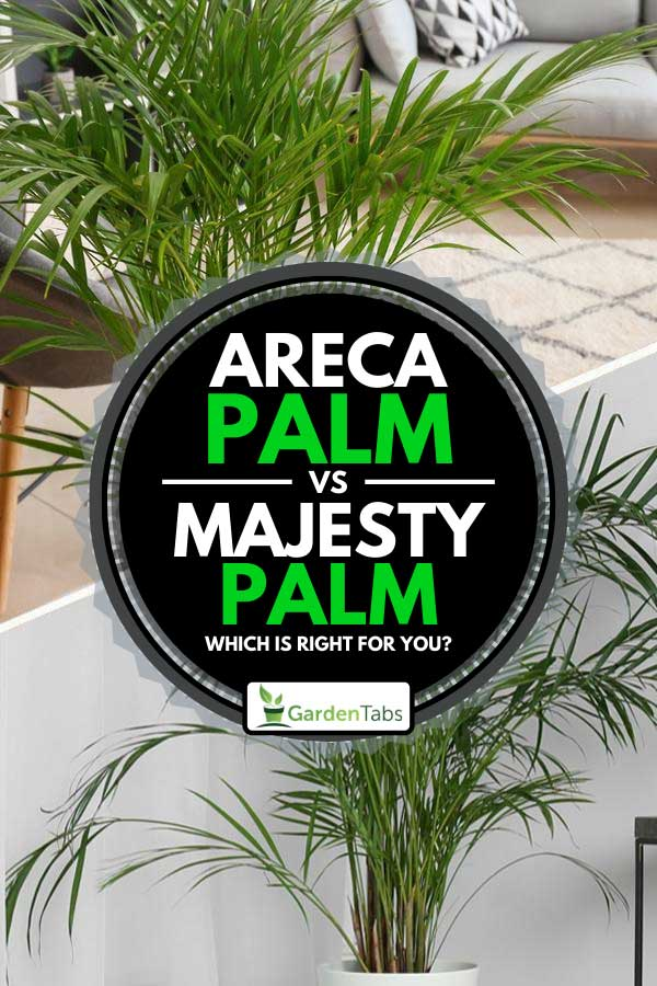 Collage of areca palm and majesty palm inside a home, Areca Palm VS Majesty Palm: Which Is Right For You?