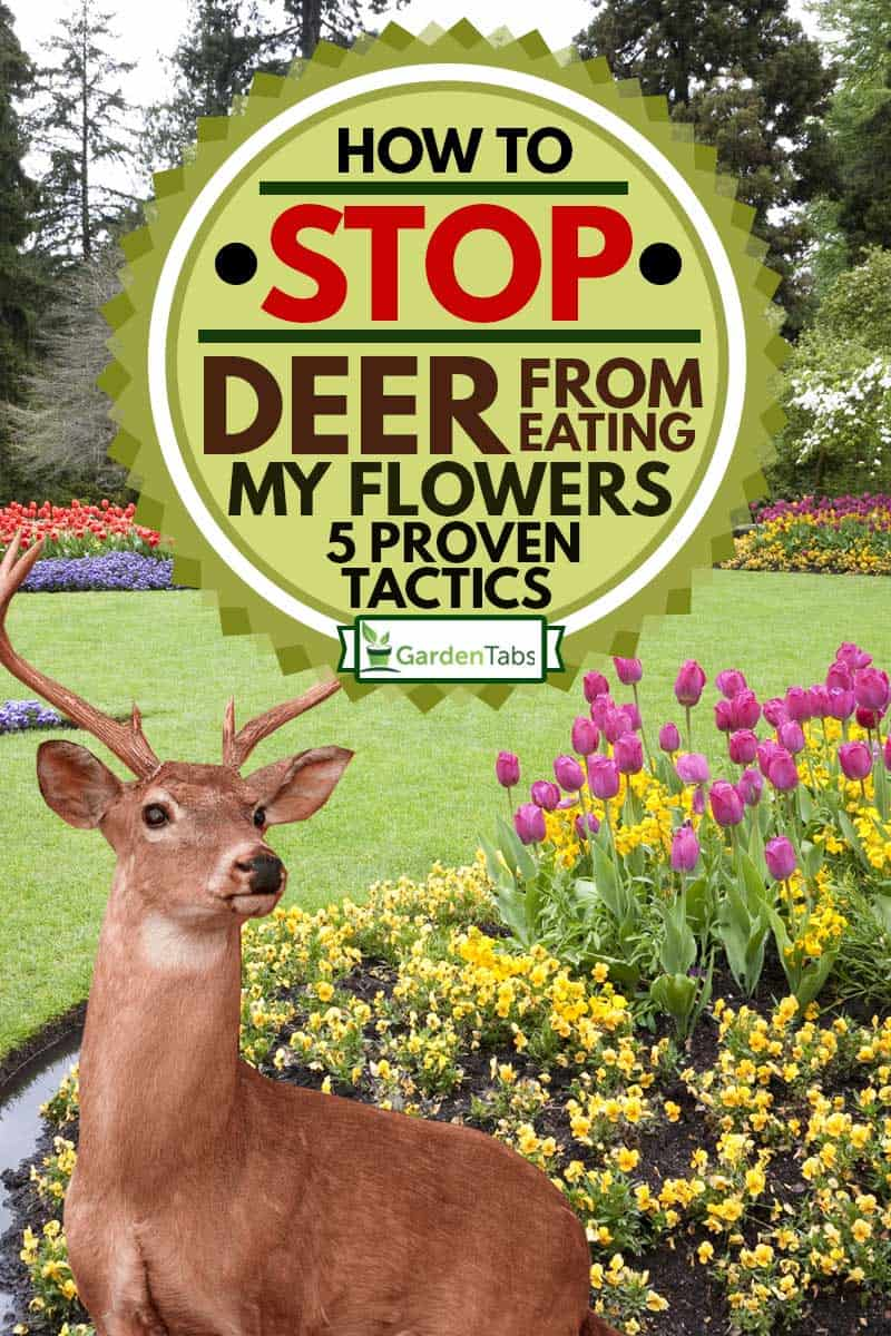 A beautiful landscaped garden of flowers with a deer in the background, How To Stop Deer From Eating My Flowers? [5 Proven Tactics]