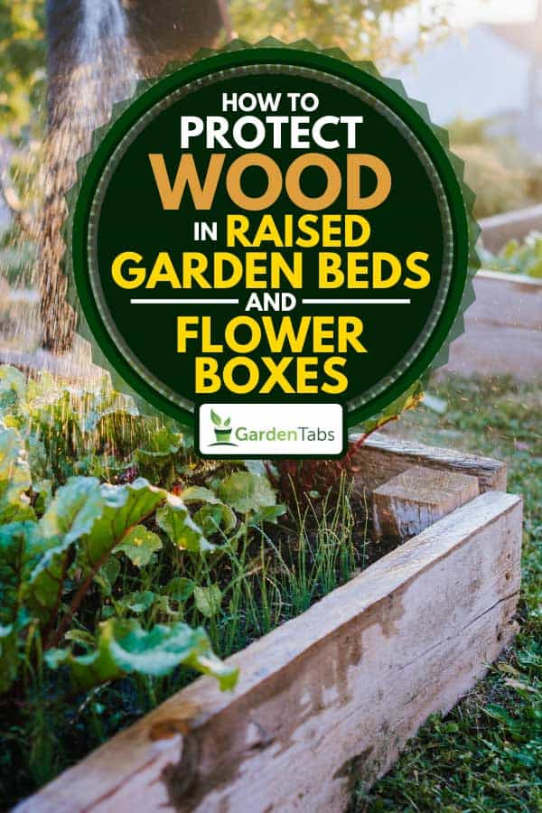 Vegetables in raised bed, How to Protect Wood in Raised Garden Beds and Flower Boxes