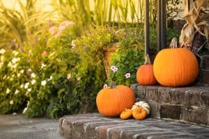 How Much Water Do Pumpkins Need? [And how often to water them]
