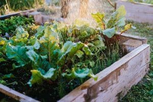 How to Protect Wood in Raised Garden Beds and Flower Boxes