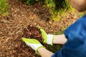 Does Mulch Attract Termites? [And how to protect your home]