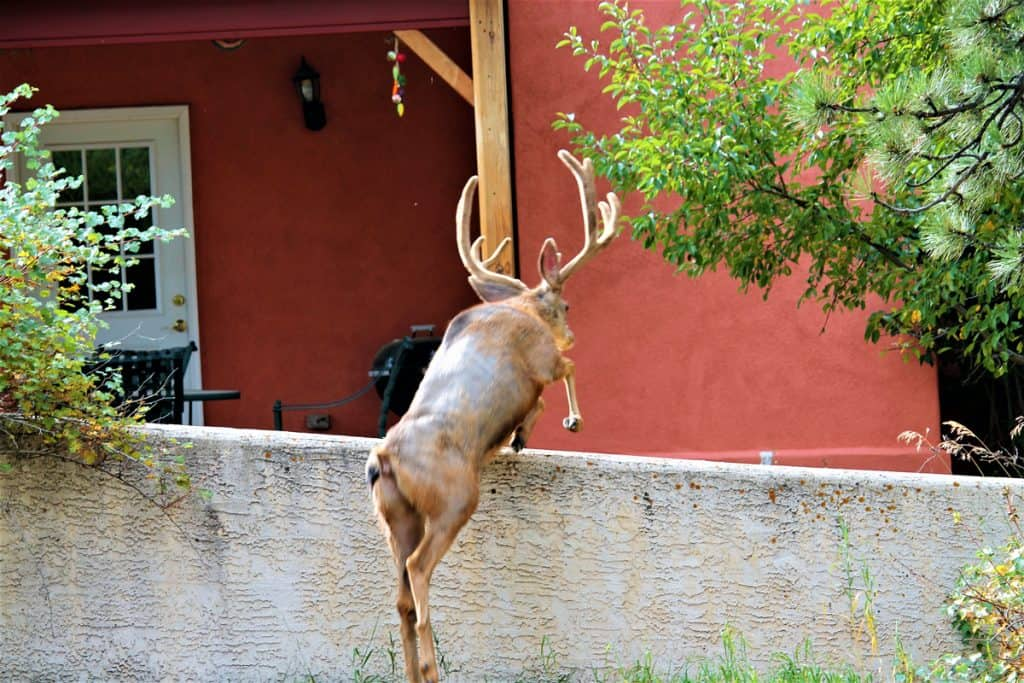 A deer jumping over the fence of a house