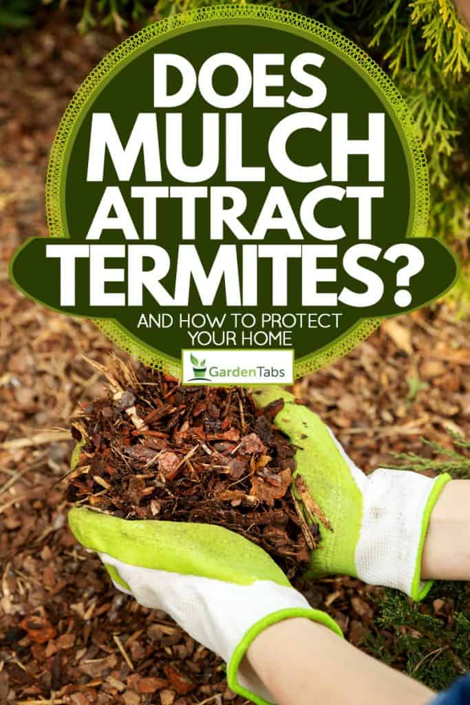A man picking up mulch on the ground for his garden as fertilizer, Does Mulch Attract Termites? [And how to protect your home]