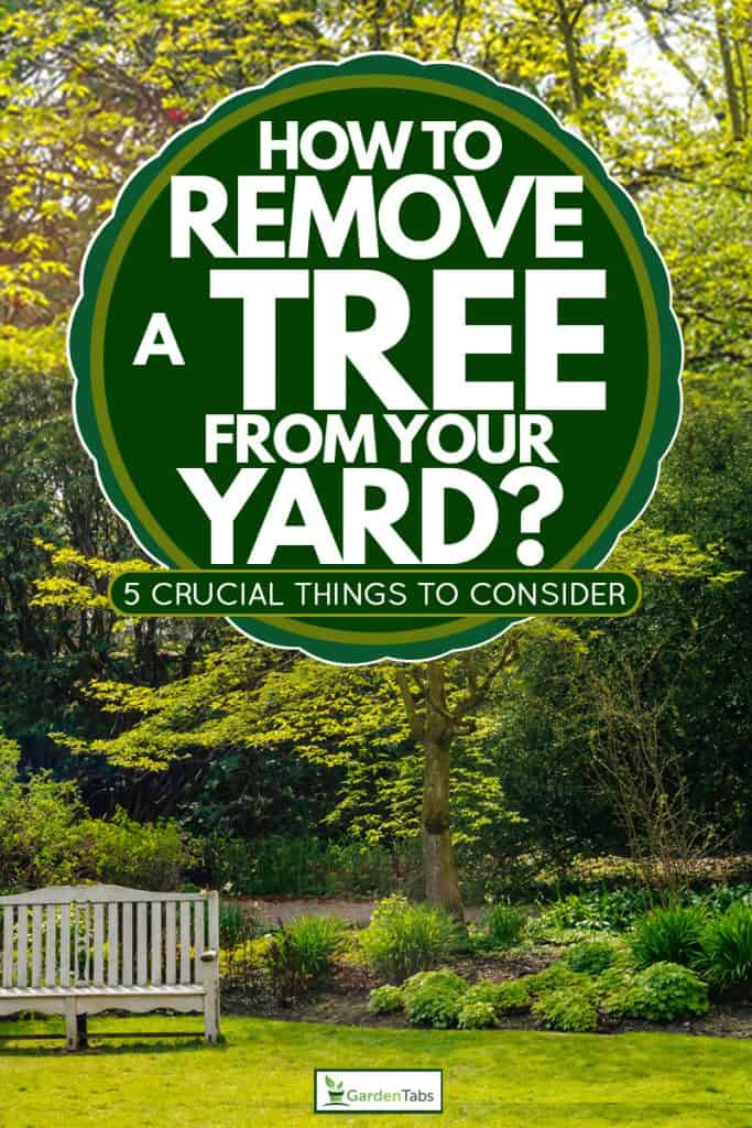 A big tree with other small shrubs on the ground with a two seater bench on the side, How To Remove A Tree From Your Yard? [5 Crucial Things to Consider]