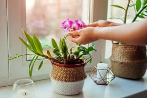 A woman holding an orchid plant on a woven pot placed near a window, 14 Bathroom Plants That Absorb Moisture And Reduce Humidity