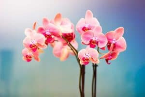 Beautiful and stunning image of a pink orchids,35 Stunning Pink Flowers For Your Garden