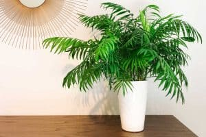 Potting Soil For Palm Trees: Here's What Kind To Get