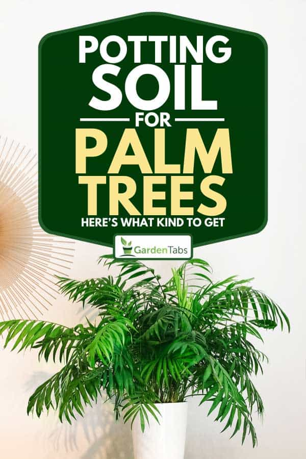Round mirror and parlor palm plant on a dresser, Potting Soil for Palm Trees: Here's What Kind To Get