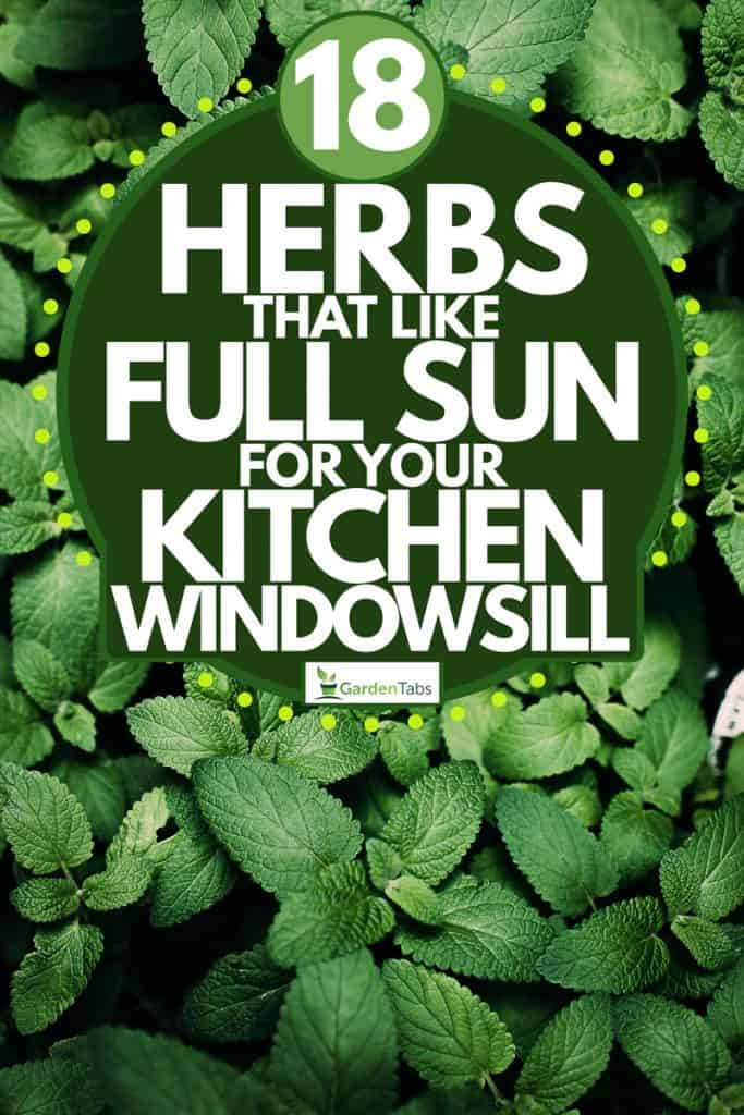 A top view of mint leaves on a garden, 18 Herbs That Like Full Sun for Your Kitchen Windowsill