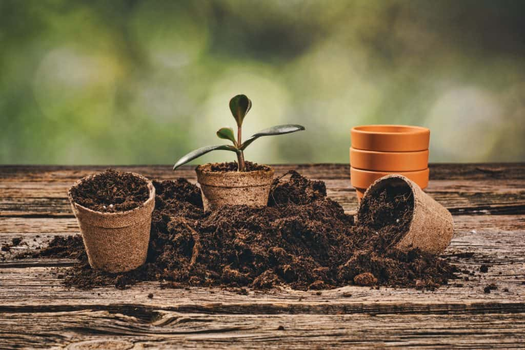 Planting a potted plant on natural wooden background in garden