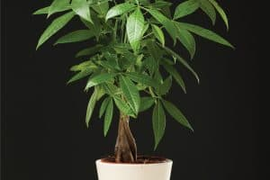 10 Best Fertilizers For Your Money Tree