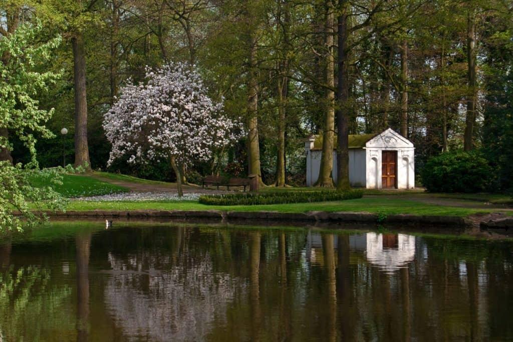 A magnolia tree near a river