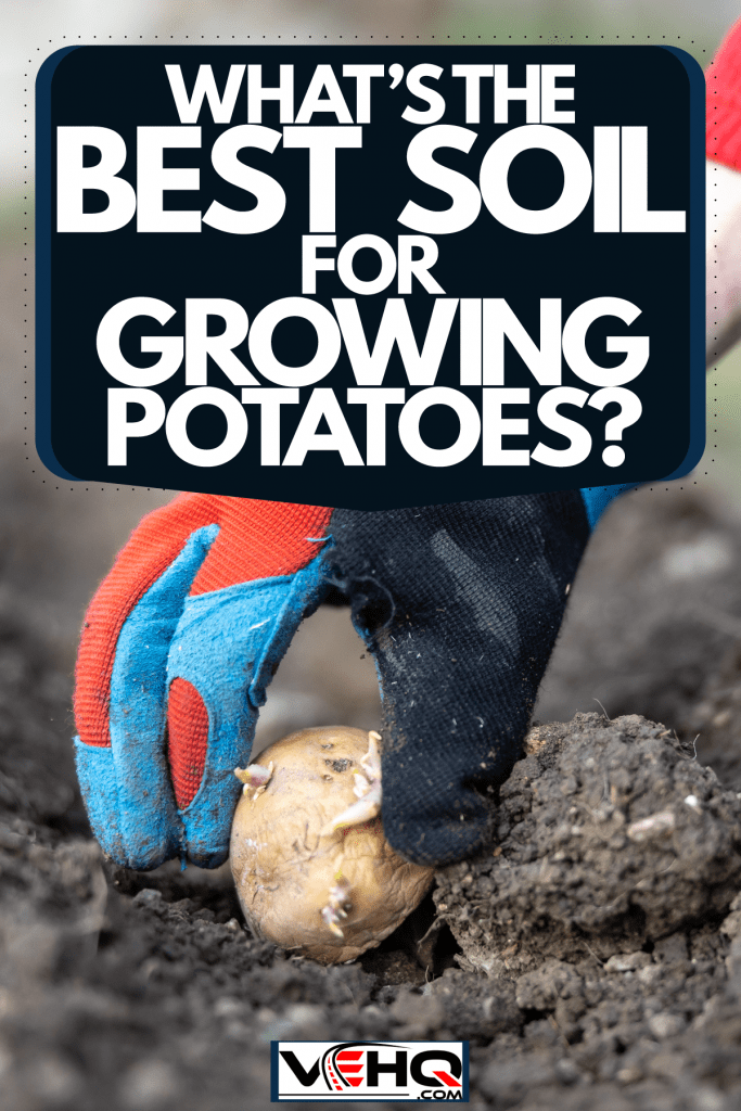A man planting potatoes in his farm, What's The Best Soil For Growing Potatoes?