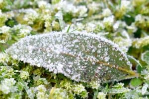 Read more about the article 9 Best Plant-Safe Ice Melts To Check Out