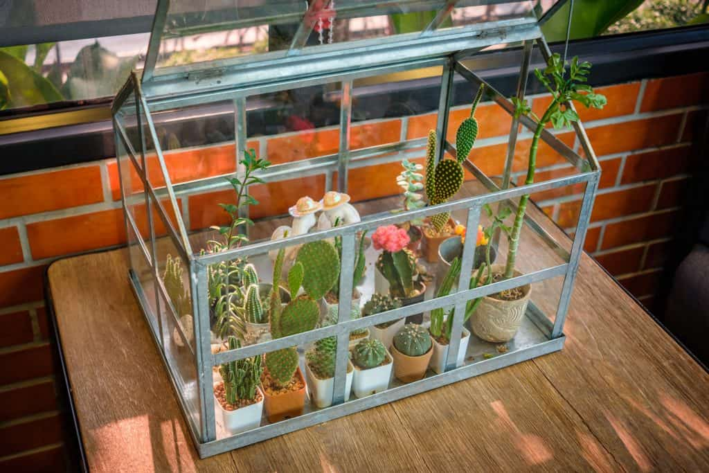 Decorated cactus greenhouse on the table in the living room, cactus collection container