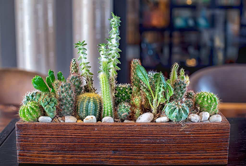Many small cactus in different shapes and different colors growing in pots
