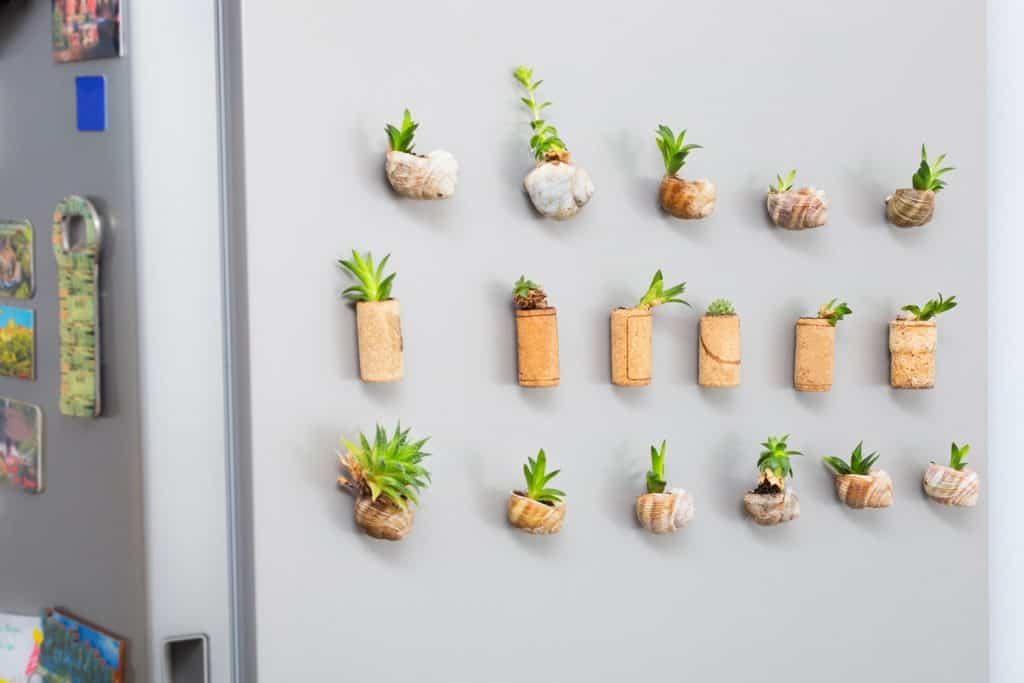 Mini garden with succulents plant growing in snail shells or cork planter, as fridge magnets
