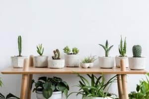 Scandinavian room interior with plants, cacti and succulents composition in design and hipster pots on the brown shelf, Indoor Succulent Garden Ideas