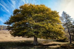 Read more about the article How Fast Do Elms Grow And How Long Do They Live? [By Type Of Elm]