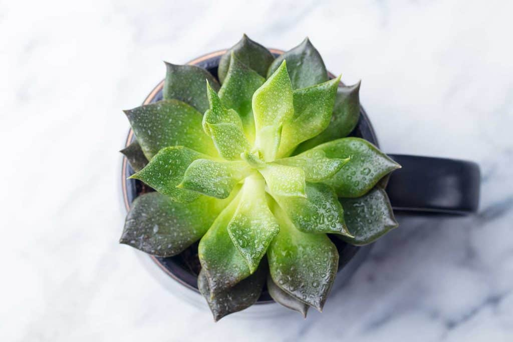 Succulent plant on marble background