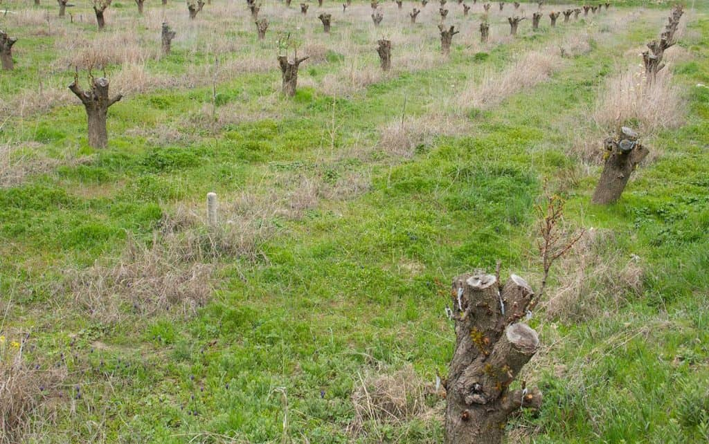 Trees grafted to a large garden