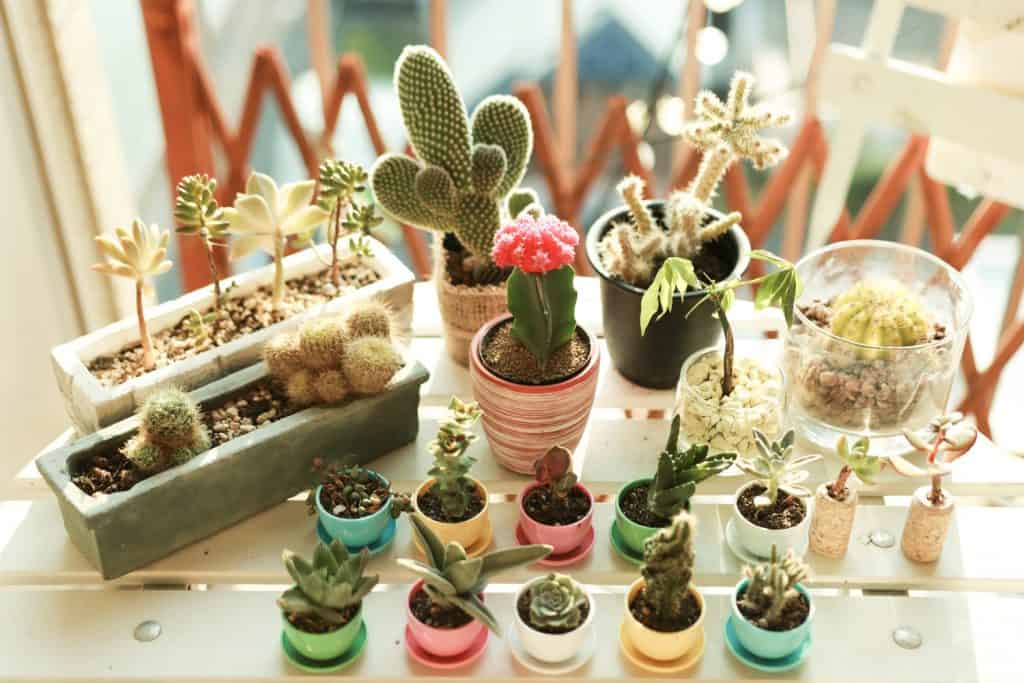 Various of Succulents and house plants on the table