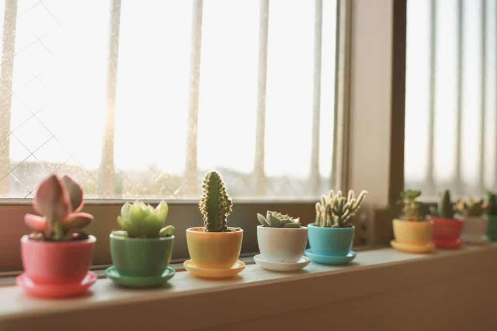 Various of Succulents in the room