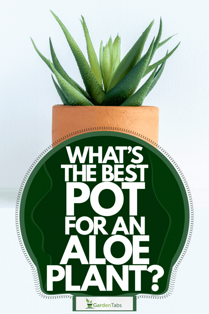 A small aloe plant on the side of a living room planted on a terracotta pot, What's The Best Pot For An Aloe Plant?