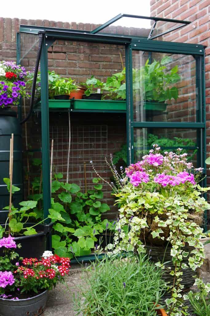 A stunning arrangement of garden flowers and plants on the backyard