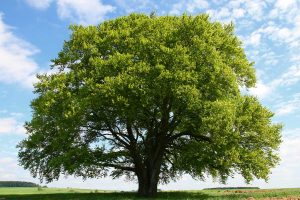 Read more about the article How Much Does A Tree Weigh?
