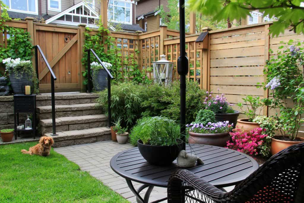 Modern inspired backyard with different shrubs and other colored plants