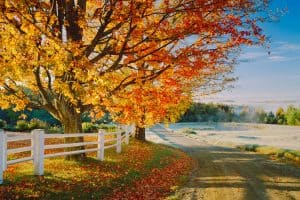 Read more about the article How Fast Does A Sugar Maple Grow?