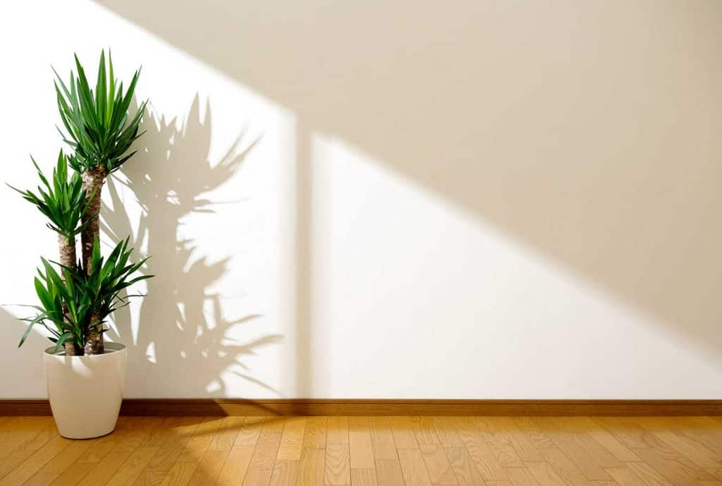 White wall and plant