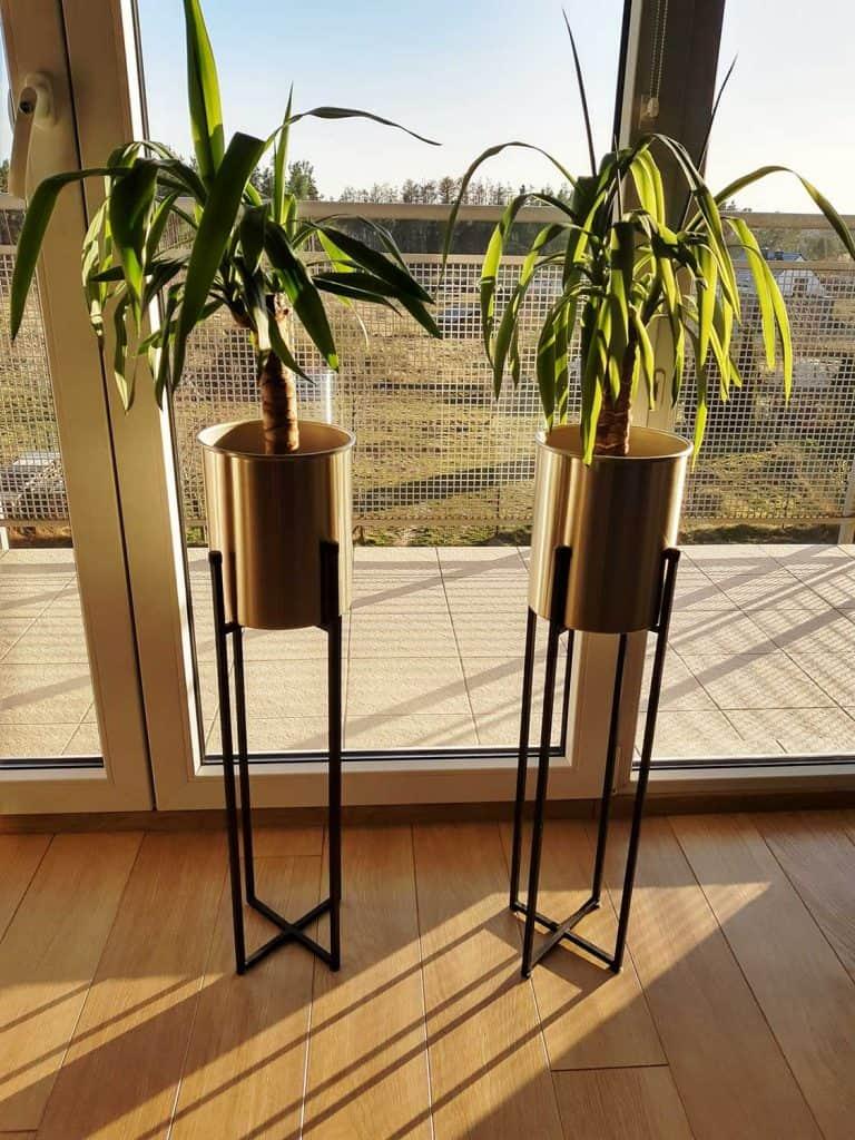Yucca plants near screen door