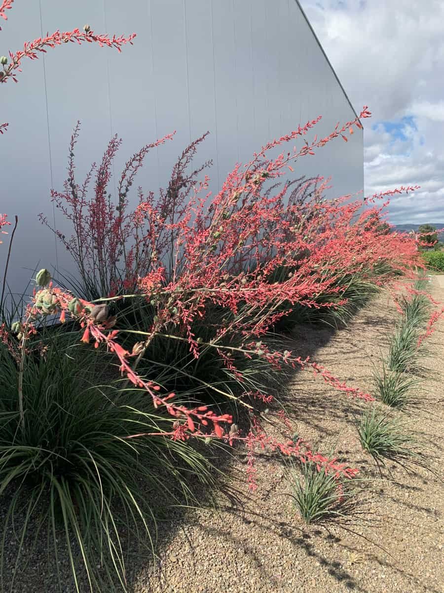 plants from Southern California gardens