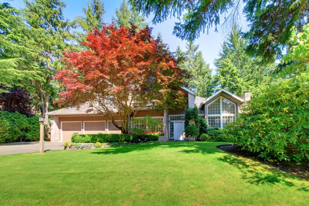 A gorgeous country home with a tall maple tree and a gorgeous grass lawn
