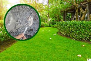 Read more about the article Is Wood Ash Good For Lawn Grass?