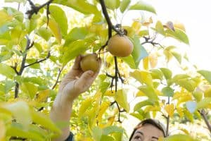 Read more about the article 15 Fruit And Nut Trees For Zone 6