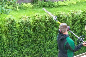 Read more about the article Arborvitae Getting Too Tall – Can You Cut Off The Top?