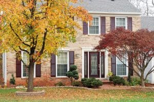 Read more about the article Can Maple Tree Roots Damage Foundation?