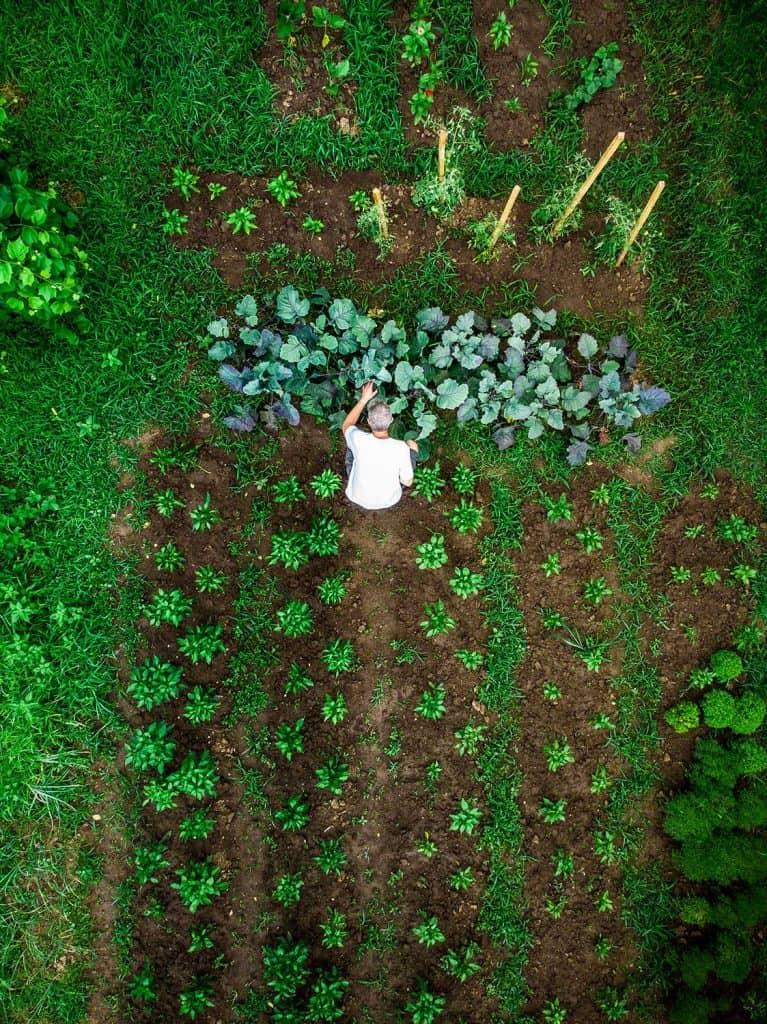 Aerial top down view of man working in vegetable garden