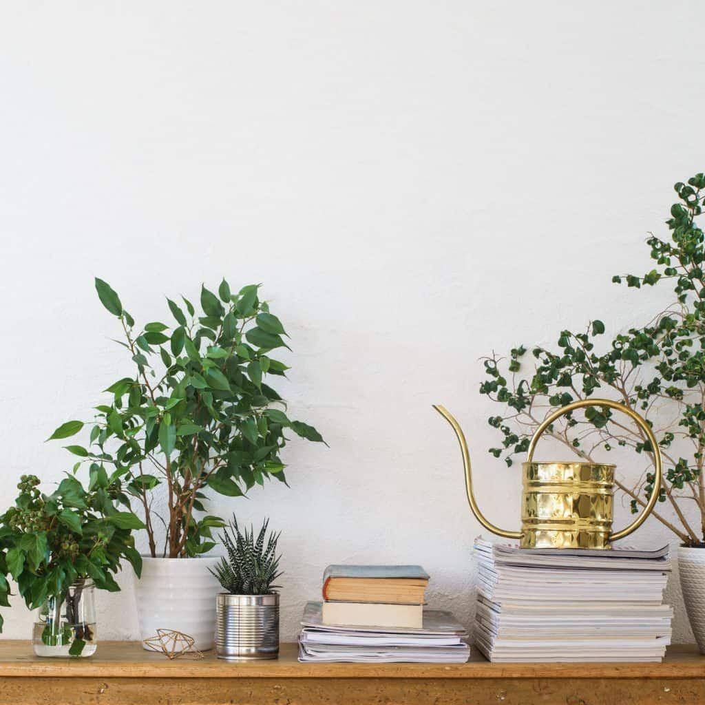 An elegant table with weeping fig trees on white small pots and books on top