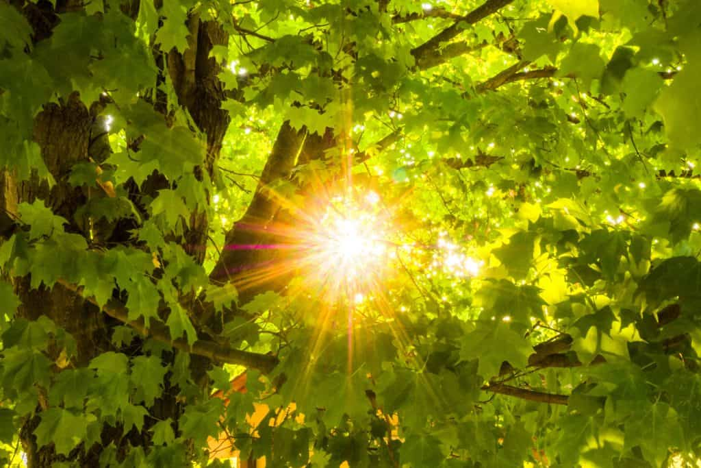 An up close photo of the sun photographed under the leaves