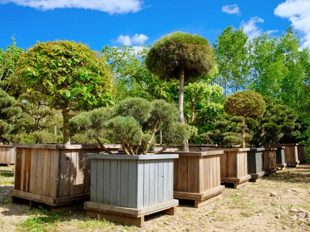 Pine, fir and garden trees and bonsai in boxes on tree farm