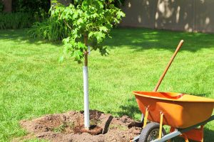 Read more about the article What Soil Is Best For Maple Trees?